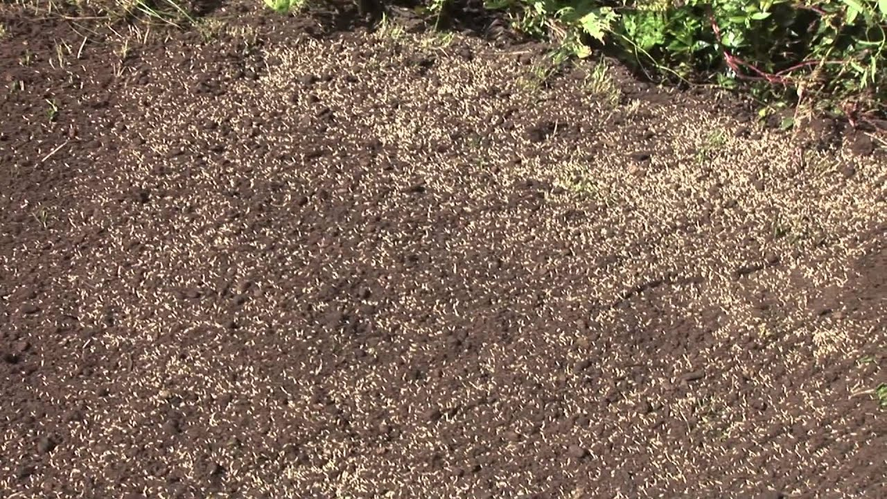 What to do if grass seed doesn't grow